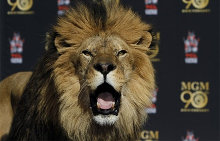 Лапа льва — Стоковое фото © Coffee999 #5445593