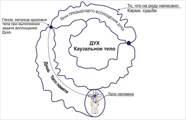 Структура Каузального тела человека, состоящего из тела памяти текущего воплощения и всех предыдущих воплощений Духа в плотно-материальном миру на физическом носителе - биологическом теле.