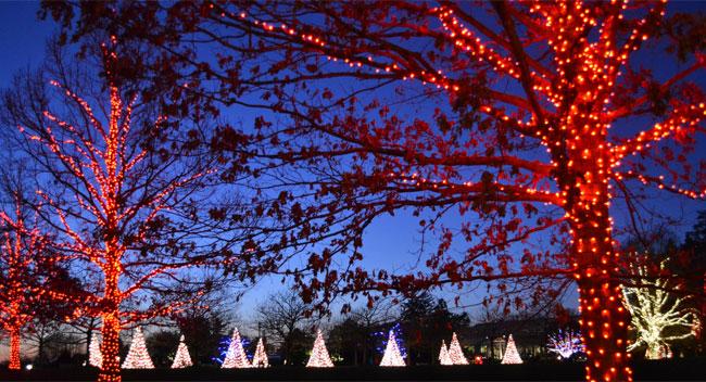 Рождественские огни на деревьях в Садах Дюпона