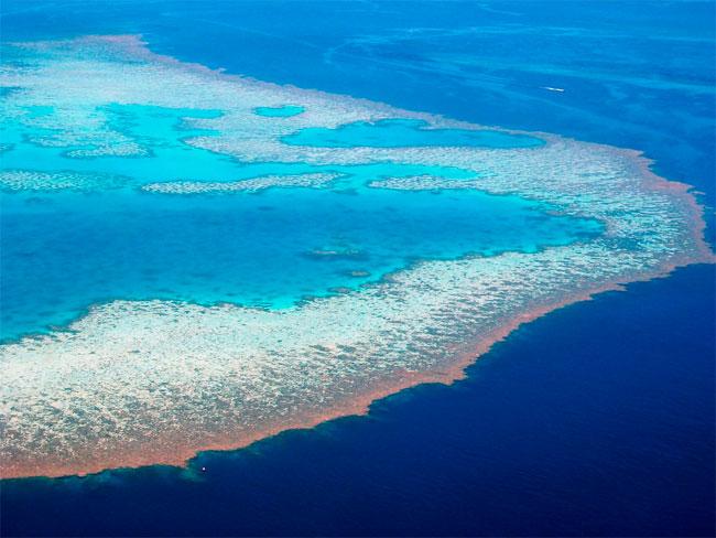 Большой Барьерный риф в Австралии сделают большой курортной зоной