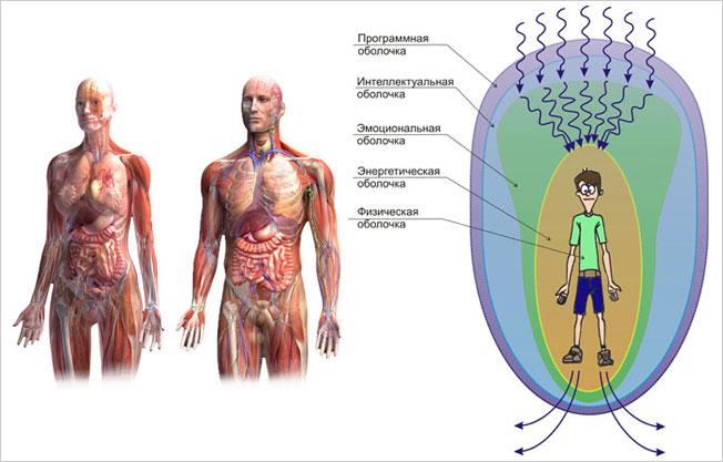 Слева: Физическая оболочка человека (физическое тело).Справа: Энерго-информационные оболочки человека (тела тонких мерностей)